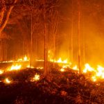 Help for people affected by bushfires